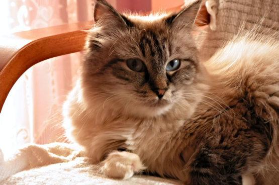 cat-2930440_1920